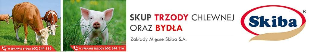 2. 1029x173 (Skiba)