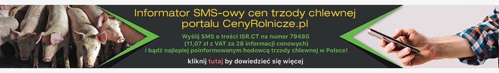SMS-rynki-zagraniczne[PC]