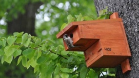 Ornitologia terapuetyczna - czyli o zbawiennym wpływie ptaków na ludzką psychikę