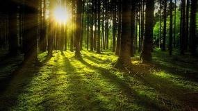 las, drzewa, słońce