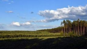 Dofinansowanie na inwestycje w prywatnych lasach. Ile można dostać?
