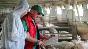 Rolnicy mają dość kontroli urzędników. Gospodarze boją się zakażeń i strat finansowych