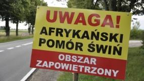 powiat mielecki, ASF, afrykański pomór świń