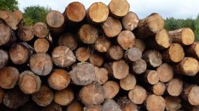 drewno, sosna, tartak, eksport drewna, ceny drewna