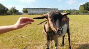 zrównanie praw gatunkowych, mowa nienawiści, mowa nienawiści wobec zwierząt