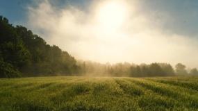 zalesianie, premia na zalesianie, pieniądze na zalesianie