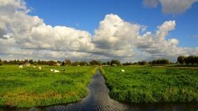 rów, woda, bydło, łąka, melioracja