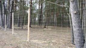 płot, ogrodzenie, granica_ASF, afrykański pomór świń