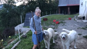 Powiązania pomiędzy psami pasterskimi a ochroną zagrożonych drapieżników