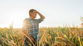 wywłaszczenie rolników, Holandia