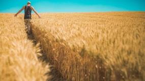 modernizacja gospodarstw rolnych, wnioski, 2021