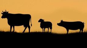 Wnioski o finansowanie lub dofinansowanie kosztów utylizacji padłych zwierząt