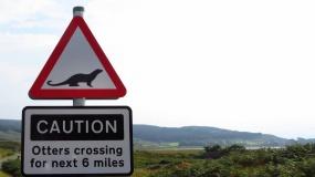 znaki drogowe, wydra, zwierzęta