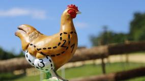 ceny kurczaków, ceny skupu kurczaków, brojlery