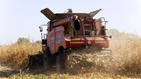 ceny kukurydzy, zbiory kukurydzy, eksport kukurydzy, ceny zboża