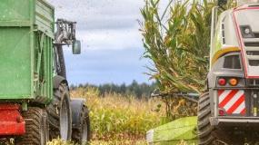 ceny zboża, ceny pszenicy, ceny w portach, ceny zboża z nowych zbiorów