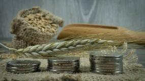 ceny zbóż, ceny skupu zbóż, ceny pszenicy, ceny skupu pszenicy